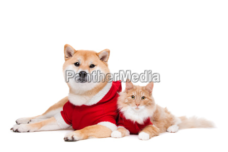 dog, and, cat - 10121371