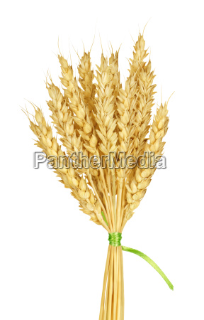 isolated, closeup, agriculture, farming, wheat, growth - 10121883
