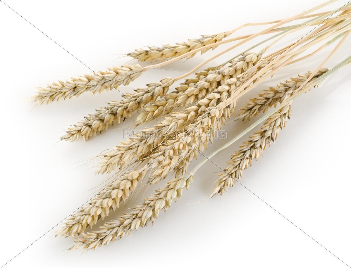 stalks, of, wheat - 10124779