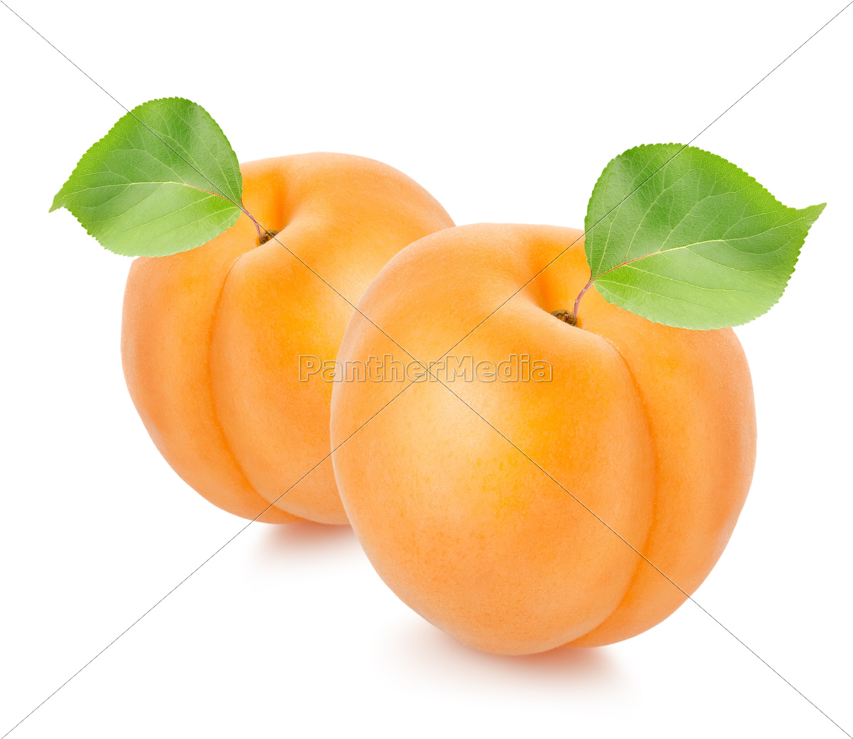 two, apricots, with, leaves - 10124825
