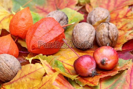 autumn, foliage, with, decorative, apples, and - 10141903