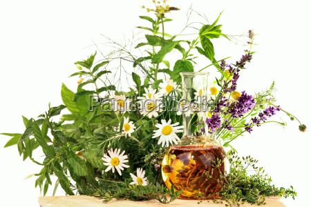 herbs and medicinal plants homeopathy