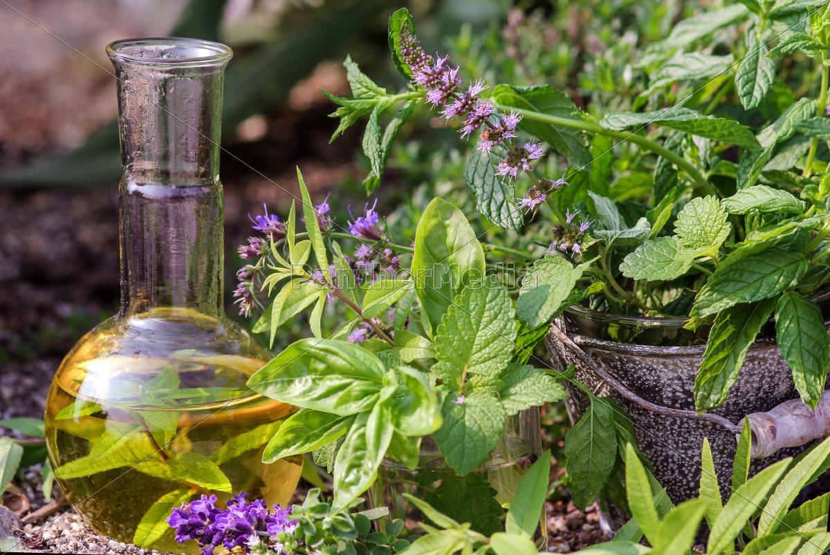 fresh, herbs, for, gentle, medicine - 10142181