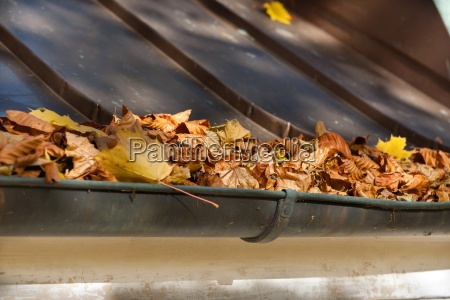 foliage in the gutter