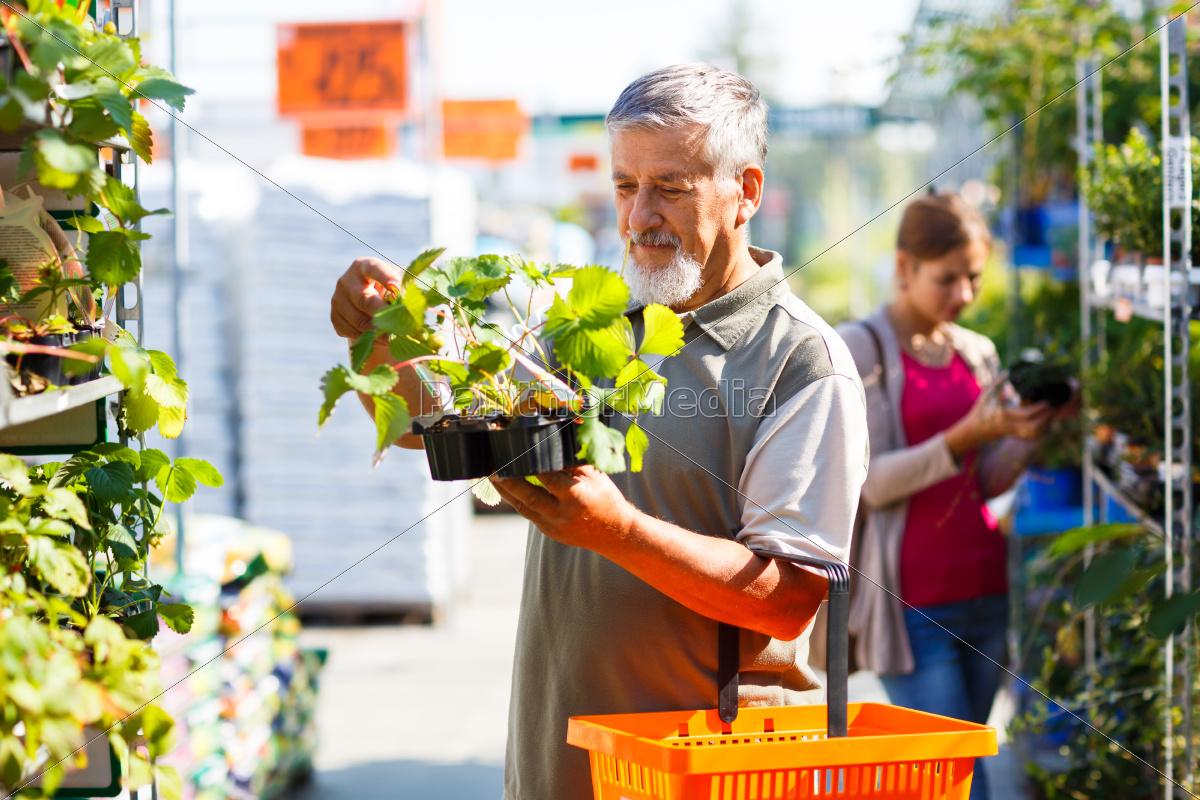 senior, man, buying, strawberry, plants, in - 10148075