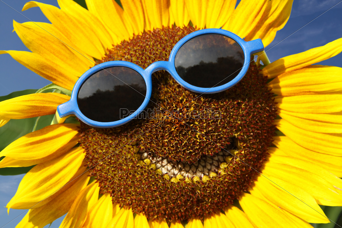 sunflower, with, a, smile - 10162485