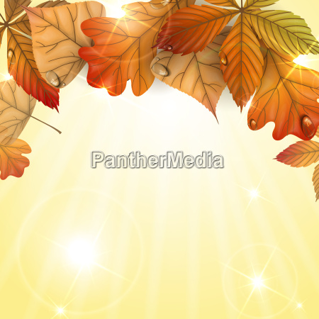 autumn, background, with, leaves. - 10168921