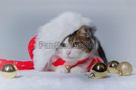 for christmas 2