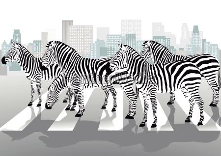 zebras, on, pedestrian, crossing - 10193203
