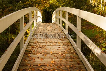 white, wooden, bridge, in, a, park - 10198471