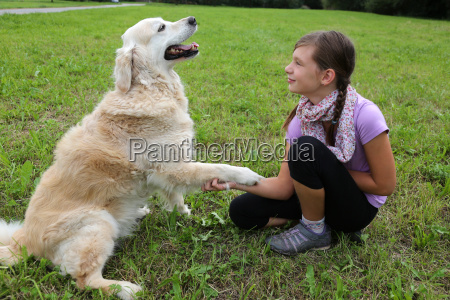 dog, gives, a, child, paws - 10217335