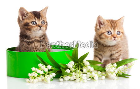 kittens in green gift box isolated
