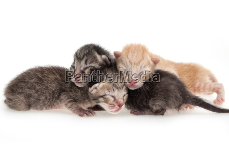 newborn, cat - 10235197