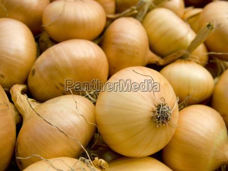 onions macro