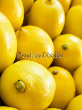 lemon vertical macro