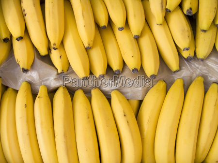 bananas, in, a, box - 10236919