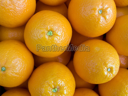 oranges on a counter background