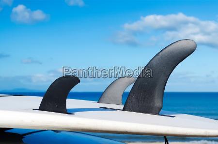 three fins