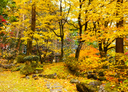 autumn, jungle - 10249903