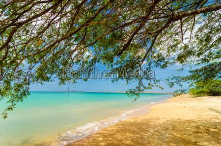 tree and beach
