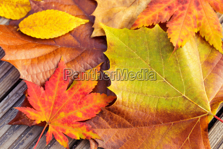 autumn, maple, leave, with, wooden, background - 10262849