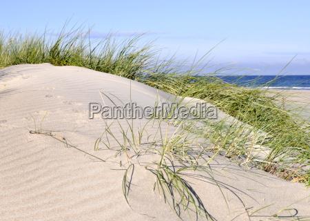 dune - 10263209