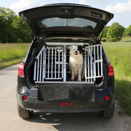 dog in a car traveling