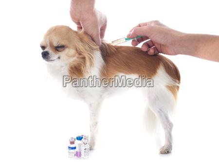 vet, and, dog - 10298669