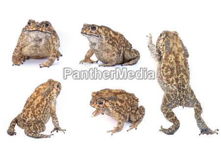 toad - 10308159