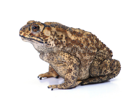 toad - 10308167