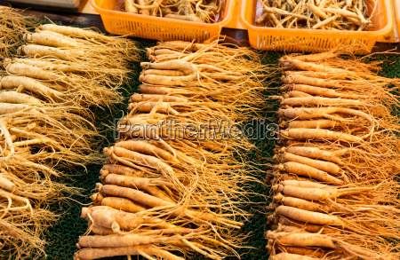 fresh ginseng stick for sell
