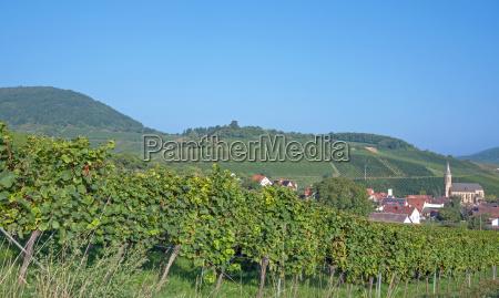 wine, village, birkweiler, on, the, german - 10319355