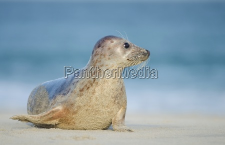 seal, on, the, north, coast - 10373643