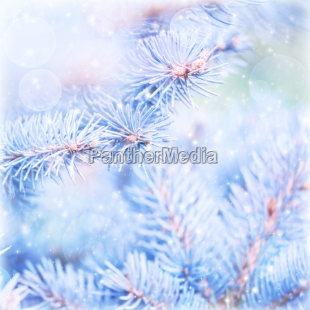 frozen pine tree background