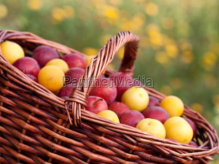 harvest happiness