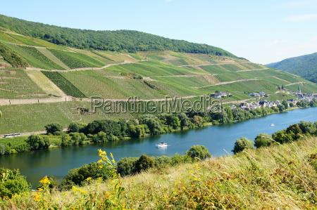 wine landscape near merl on the