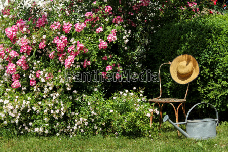 rose garden with chair sun and