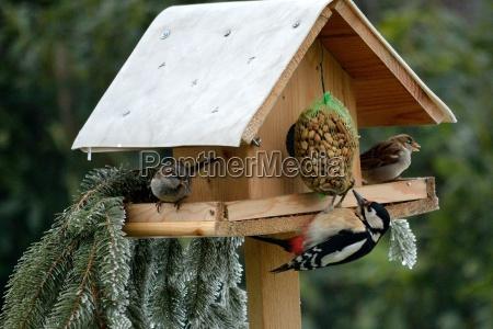 birdhouse with buntspecht