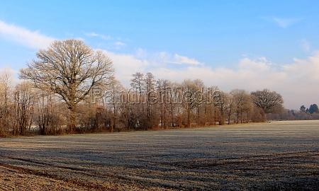 hoarfrost in the muensterland