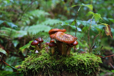 lasting mushrooms scenery countryside nature forest