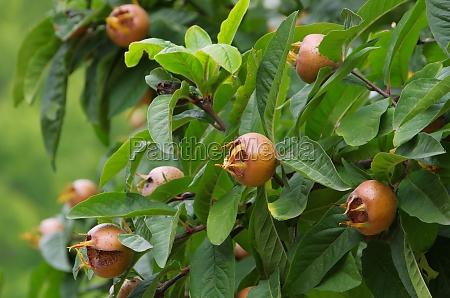 foglia albero verde marrone foglie maturo