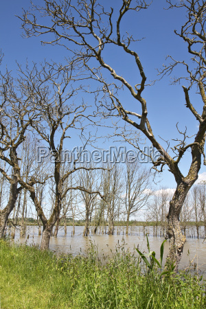 flooded land with dead trees