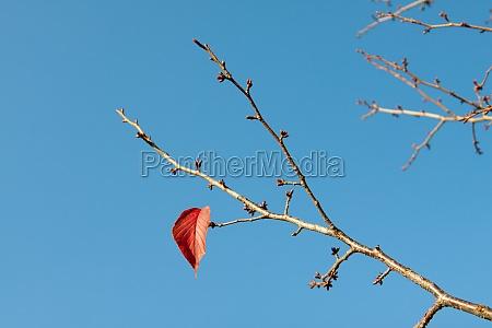 single autumn leaf