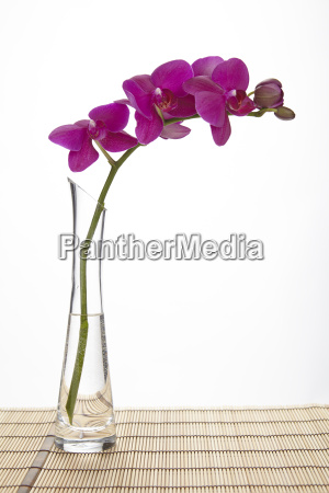 purple orchid into a vase