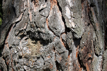 rough tree bark with astnarbe