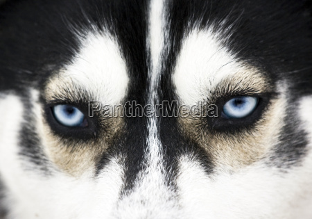 close up on blue eyes of