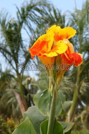 flower, plant, bloom, blossom, flourish, flourishing - 10820610