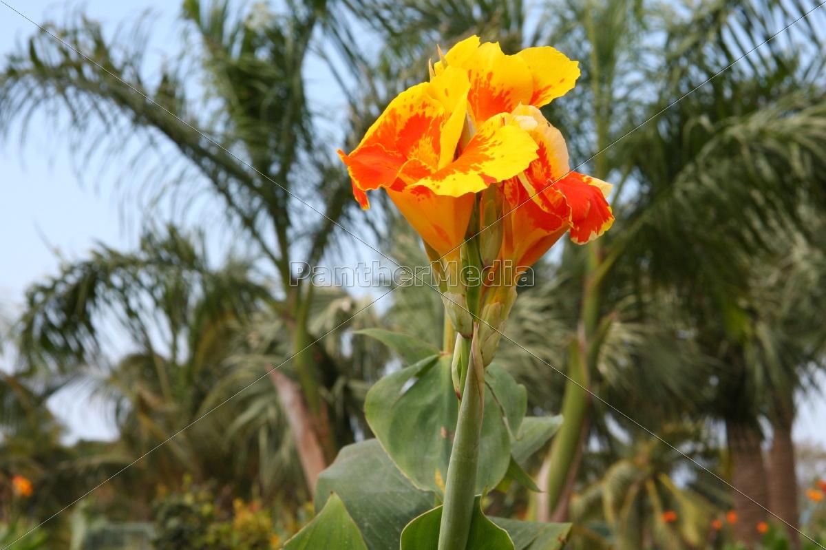 flower, plant, bloom, blossom, flourish, flourishing - 10820616