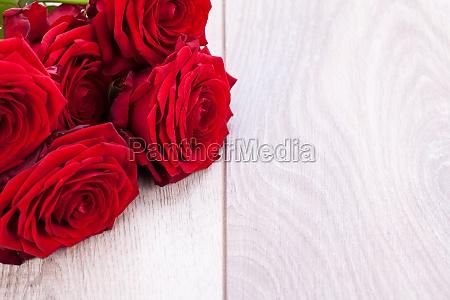 gorgeous red rose close up macro