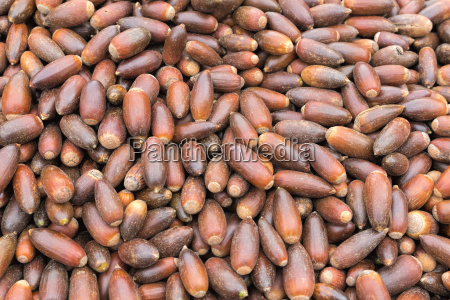 argan nuts in morocco background